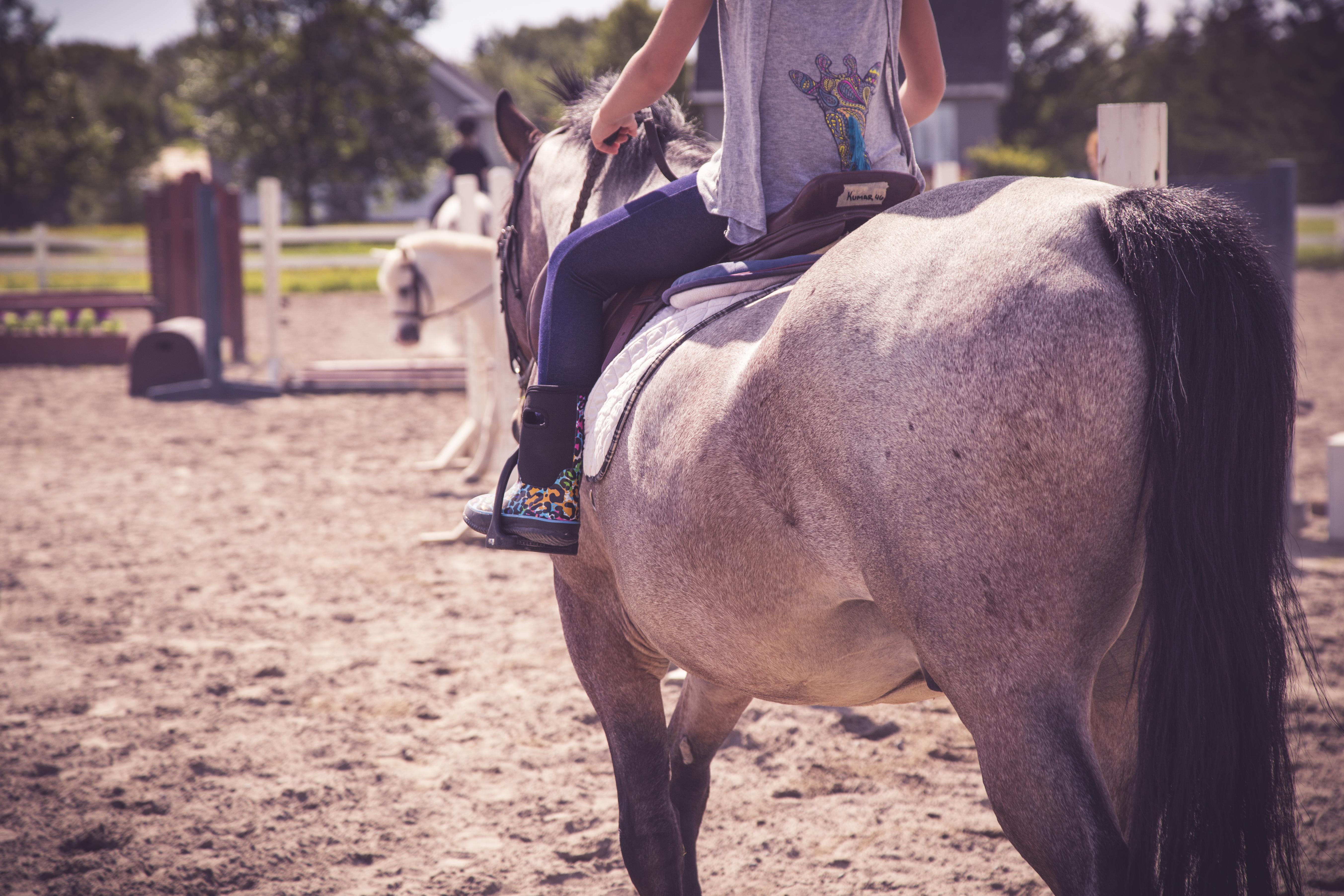 Équitation voltige