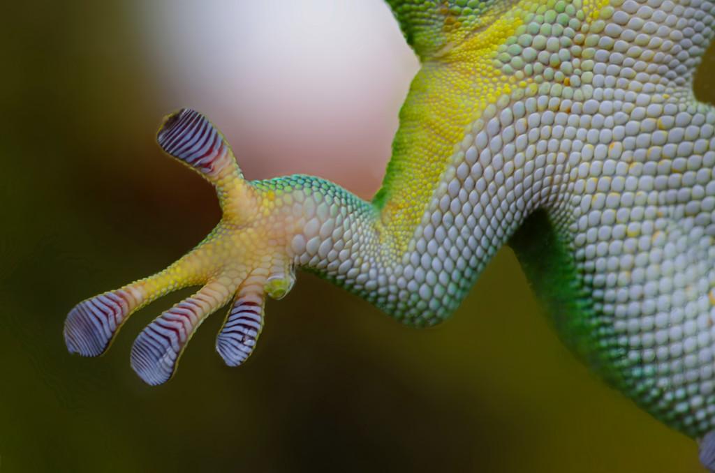 nature-hand-animal-glass